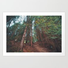 into the woods 05 Art Print