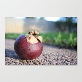 Mangosteen: A Case Study. Canvas Print