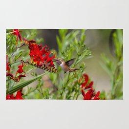 Rufous Hummingbird Feeding, No. 2 Rug