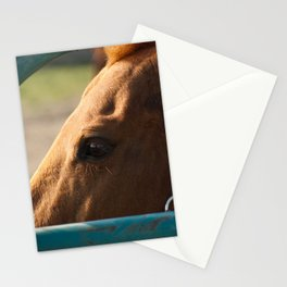 Paddock 6 Animal / Horse Photograph Stationery Cards