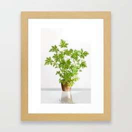 Pelargonium citrosum plant Framed Art Print