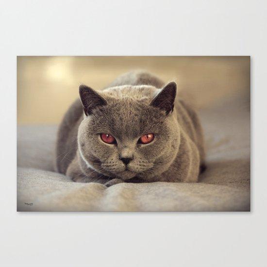 Superstar Diesel the Cat ! Canvas Print