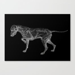 Dog Skeleton Canvas Print
