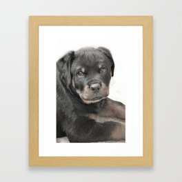 Rottweiler puppy Framed Art Print