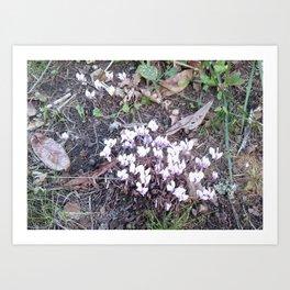 Cyclamen Photo 753 Art Print