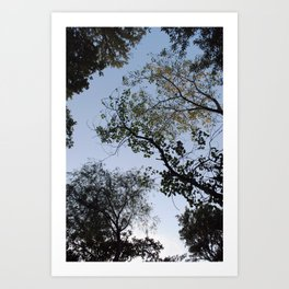 viewing the canopy  Art Print