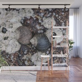 Periwinkles and Barnacles on a rock Wall Mural