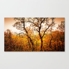 Nature Red Canvas Print