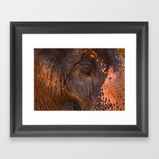 Gentle and Wise Framed Art Print