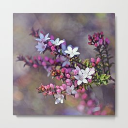 Australian Box Leaf Waxflowers Metal Print