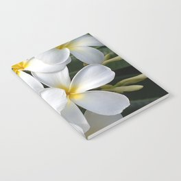 Wild Tropical Hawaiian Plumeria Flowers Notebook