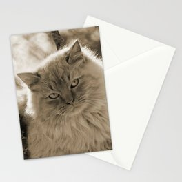 Sunlit Cat in Sepia Stationery Cards