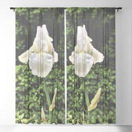White Iris In The Rain Sheer Curtain