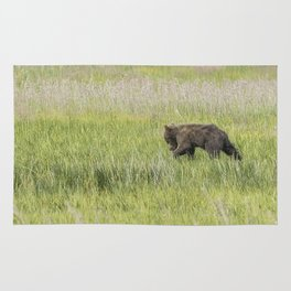 Young Brown Bear Cub, No. 1 Rug
