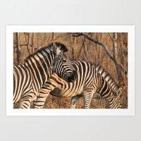 Zebras at Sunset Art Print