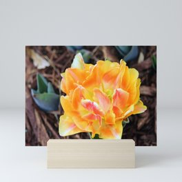 Marmalade Colored Tulip Mini Art Print