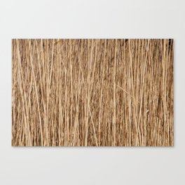 Thousands of reeds Canvas Print