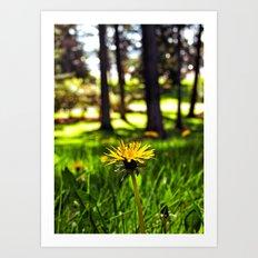 Park dandelion Art Print
