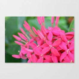 Pink Petals CR Canvas Print