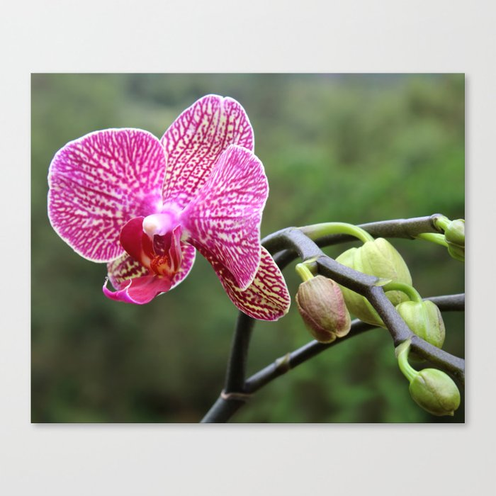 Mama Orchid Canvas Print