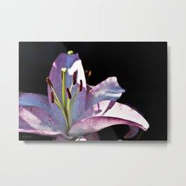Lavender Lily Metal Print