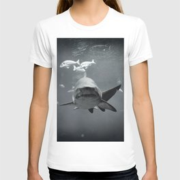 Shark Intense T-shirt