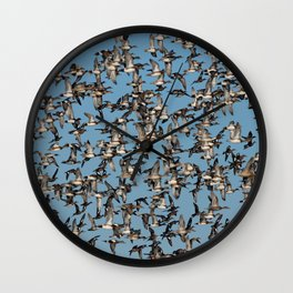 Wintering Ducks in Flight Wall Clock