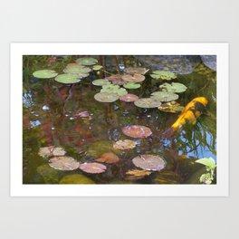 Koi Pond and Lilypads Art Print