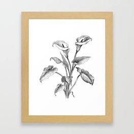 Vintage Calla Lily Bush Framed Art Print