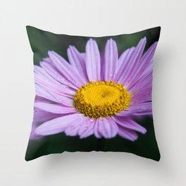 Violet daisy Throw Pillow