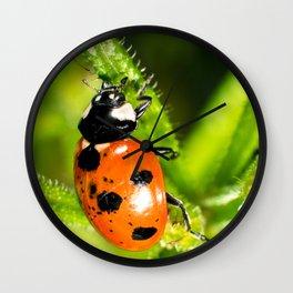 Ladybug Ladybug Wall Clock