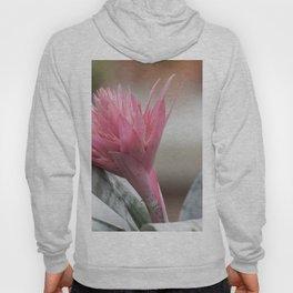 pink aechmea  flower in bloom  in the vase Hoody