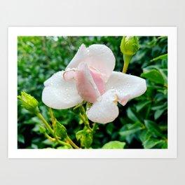 Little Rose Art Print