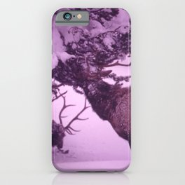 ELK EATING EPIPHYSES ON A PINE IN ISH RIVERS COUNTRY OF THE PACIFIC NORTHWEST. NEAR SEATTLE NARA iPhone Case