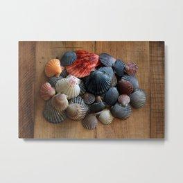 A Pile of Scallop Shells Metal Print