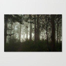 eucalyptus trees in fog Canvas Print