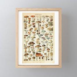 Vintage Mushroom & Fungi Chart by Adolphe Millot Framed Mini Art Print