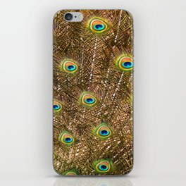 Peacock Feathers in Full Display iPhone Skin