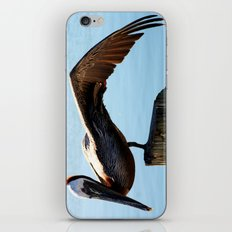 Pelican Wing iPhone & iPod Skin