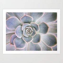Nature Photography | Cactus Art | Pink and Blue Succulent | Plant | Botanical Art Print
