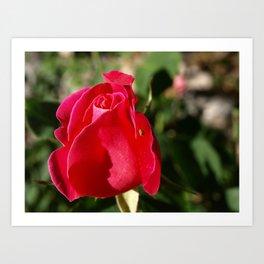 """Rose Bug"" Art Print"