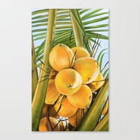 coconut wishes Canvas Prints featuring Coconut by The Art of Vancuf