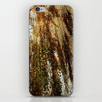 birch iPhone & iPod Skins featuring Birch by TakaTuka Photo