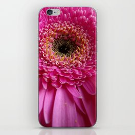 African daisy iPhone Skin