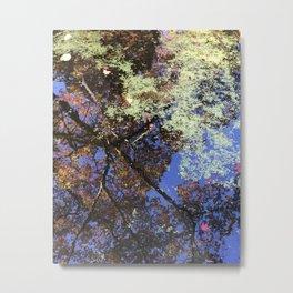Japanese Maple Tree Reflections Metal Print