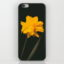 Elegant gold on black old-master botancial print style:  Double Daffodil photograph iPhone Skin