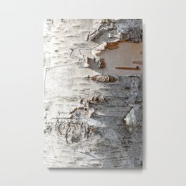 Full frame of birch bark tree detailed texture in close-up Metal Print