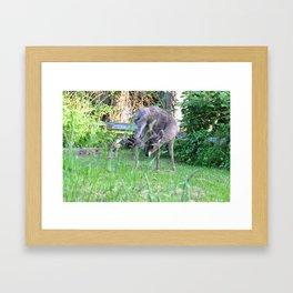 Buck scratching its head Framed Art Print