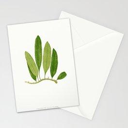 Edward Joseph Lowe - Polypodium Squamulosum Stationery Cards