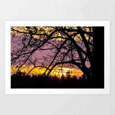 Branches Beholding Beauty Art Print